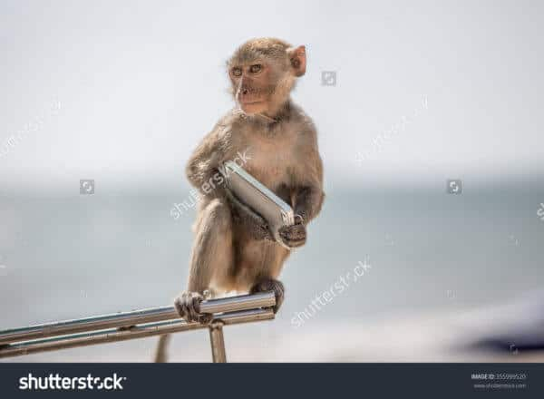 Monkey with an Smartphone